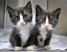 18 animais gêmeos que são verdadeiras fofuras em dobro. #AnimaisGêmeos #Gêmeos #PortalDicasDeVó #Animais