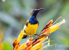 Op reis wil je natuurlijk graag al dat moois fotograferen. Vogels zijn een fijn onderwerp maar hoe zit je die vliegensvlugge beestjes nu op de foto? Reisfotografie vogels | simoneskitchen.nl