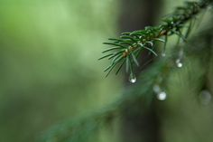 Pine in Earthquake Park by Laureltreephoto on Etsy, $40.00