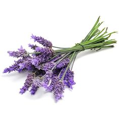 lavender-flowers.jpg ❤ liked on Polyvore featuring flowers, filler, decor, plants, detail and embellishment