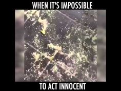 When Its Impossible To Act Innocent - YouTube