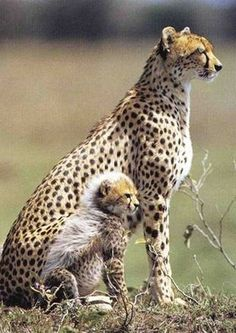 地球で「最もかっこいい動物」の画像と名前 - NAVER まとめ