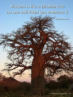 Wisdom is like a baobab tree, no individual can embrace it #quote #inspiration