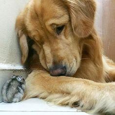 um-cachorro-oito-passarinhos-e-um-hamster-são-os-amigos-mais-incomuns-11