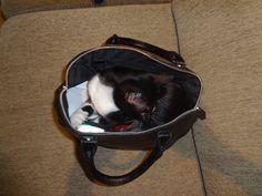 Ele adora as minhas malas  https://www.youtube.com/watch?v=B6BQDBJay5U