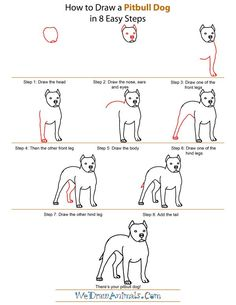 Easy to Draw Dogs Step by Step | how-to-draw-a-pitbull-dog-step-by-step.png (600×776)