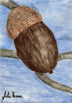 Using A Photo of An Acorn To Draw A Picture of An Acorn
