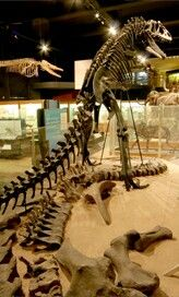 Weekends will always offer families a chance to take a free dinosaur tour at the UM Museum of Natural History! Michigan Made Products, Family Travel, Family Trips, Free Museums, University Of Michigan, Ann Arbor, Great Lakes, School Teacher, Pre School