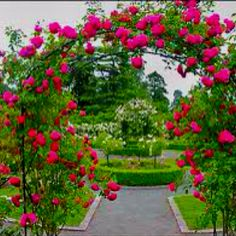 My dream home will have a trellis with rose vines or another pretty climbing flower that is really hard to kill...