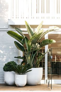 indoor decorative plants to bring freshness; home decoration with indoor plants zone Small Backyard Gardens, Balcony Garden, Garden Pots, Outdoor Gardens, Balcony Plants, House Plants, Tropical Landscaping, Backyard Landscaping, Small Outdoor Spaces