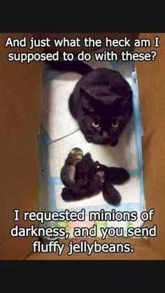 85 Best Cat Humor Images On Pinterest In 2019