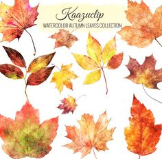 Watercolor Autumn Leaves Collection by Kaazuclip on Creative Market