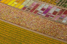 Flower fields, Lompoc, California, USA, 2013.   22 Stunning Aerial Photos That Reveal A Beauty From Above