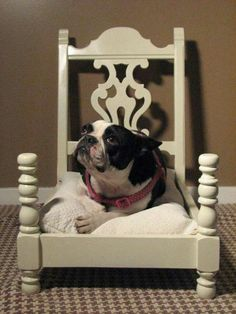 Upcycle dog bed or cat bed from an old chair Pet Furniture, Repurposed Furniture, Modern Furniture, Furniture Design, Painted Furniture, Furniture Ideas, Repurposed Items, Furniture Vintage, Chair Design