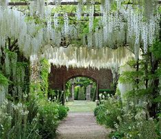 Wisteria Garden, Wisteria Wedding, Wisteria Pergola, White Wisteria, Backyard Pergola, Pergola Ideas, Patio Ideas, Landscape Design, Garden Design