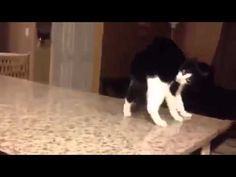 Кот пошел красиво, но упал