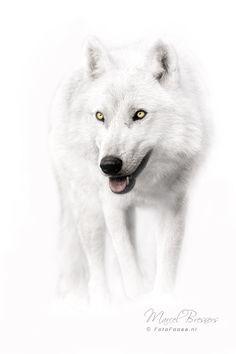 Amazing wolf eyes!
