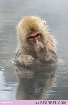 This Monkey Says It All…
