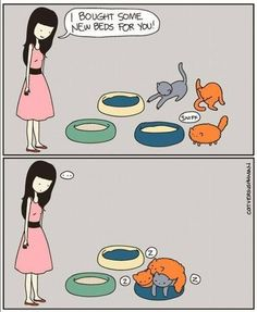 cats and beds