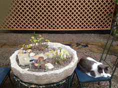 Living wall & tufa tabletop