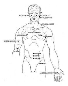 Kinesiologia BDORT Integra - A.M.O.R.E. NATURA