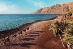 Dahab ..south Sinai