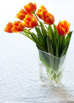 Tulip Tip: Use a tall vase to support the growing stems, and make sure the vase is absolutely clean! (click the pic to read more great tips)