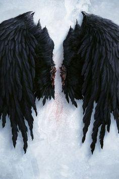 "Lucifer ""The Fallen"" Black Angel Wings, Black Angels, Image Beautiful, Demon Aesthetic, Castiel Aesthetic, Wings Wallpaper, Wallpaper Desktop, Flash Wallpaper, Dope Wallpapers"