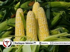 Corn fresh on the cob . There is nothing better. But, with the way I eat corn on the cob? Farms Living, Down On The Farm, Sweet Corn, Sweet Sweet, Low Calorie Recipes, Mellow Yellow, Yellow Corn, Color Yellow, Fruits And Vegetables