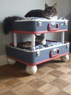 Upcycled cat beds from suitcases. This is super cute, but would my cats use it?