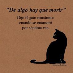 """""""De algo hay que morir"""" Dijo el gato romántico cuando se enamoró por séptima vez. #frases"""