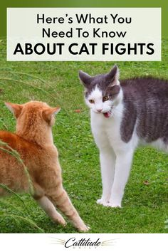 We all wish our cats would just get along, but it's important to educate ourselves about cat fights. It's the only way to protect our pets and keep them safe.