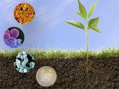 The origin of Microbes fertilizer