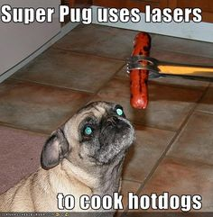 Super Pug uses lasers to cook hotdogs