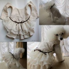 nideru | Rakuten Global Market: The resize is simple, too. Clothes costume pattern paper pattern pretty handmade handmade nideru original dress handicrafts dog clothes dog dog dog wedding wedding ceremony wedding engagement betrothal present of the dog of the Shih Tzu Pekingese poodle