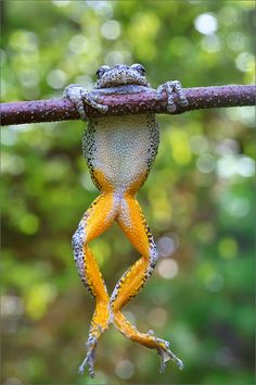 Hang in There (by Patrick Zephyr Photography)