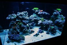 "Top Reef Tank Aquascapes | Current Tank Info: 30x30x18"" 70 gallon Cube.....Bonsai Inspired Open ..."