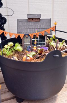Miniature Halloween Garden - with Venus Fly Traps