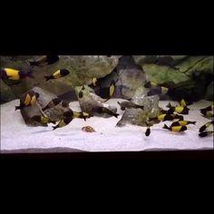Our 3D backgrounds are suitable for all type of aquariums Apartment Interior Design, Luxury Interior Design, Modern Interior, Colorful Fish, Tropical Fish, Aquarium Backgrounds, 3d Background, Exotic Fish, Aquarium Fish