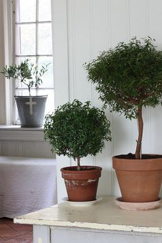 Topiaries...swedish blog with pretty ideas and a recipe for toffee cookies.