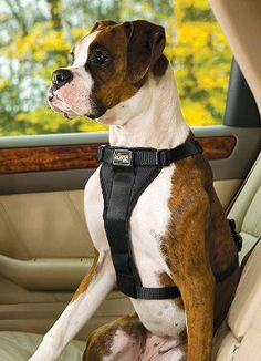 Our easy-to-use Tru-Fit Smart Harness with Seat Belt Loop lets you buckle up your pet and hit the road with confidence.