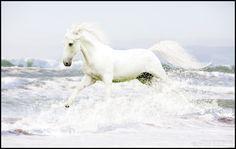 Ocean Waves by hp-fallenangel.deviantart.com on @deviantART - PLEASE KEEP DESCRIPTION