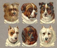Hundar | Flickr - Photo Sharing!