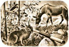Kangaroo, Illustration, Animals, Baby Bjorn, Animales, Animaux, Animal, Illustrations, Animais