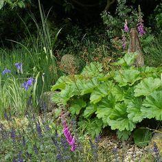 http://www.marklaurence.com/pics/rain_garden-500.jpg