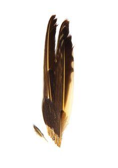 flicker wing (mary jo hoffan)