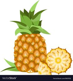 Pineapple vector image on VectorStock Free Vector Images, Vector Free, Pineapple Illustration, Fruit Vector, Chocolate Cookie Recipes, 3d Cards, Fruit Art, Art Images, Biology