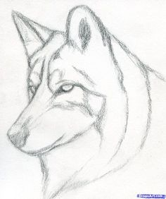 Easy pencil drawings for beginners. how to draw a wolf head, mexican wolf step 3 Easy Pencil Drawings, Pencil Drawings For Beginners, Pencil Drawing Tutorials, Cute Drawings, Drawing Sketches, Drawing Faces, Drawing Ideas, Drawing Guide, Face Sketch