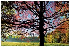 The Sassafras tree. It is pretty and has great fall foliage. Also makes good tea.