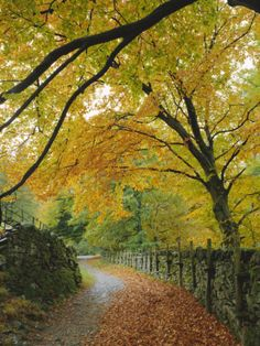 size: Photographic Print: Autumn Colours Near Grasmere, Lake District National Park, Cumbria, England, UK by Roy Rainford : Travel Lake District, Autumn Scenery, Autumn Trees, Fall Pictures, Cumbria, Fauna, Mellow Yellow, Lombok, Beautiful World